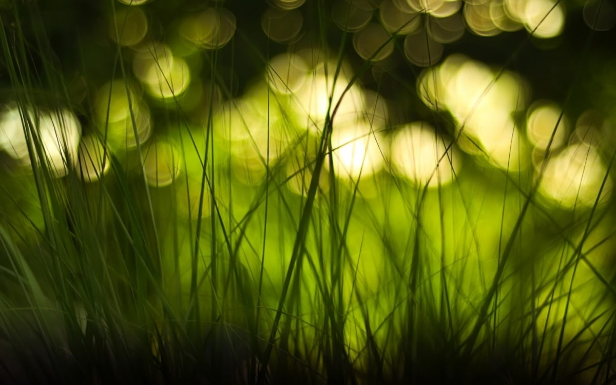 blurry-nature-wallpaper-blurred-nature-background-related ...